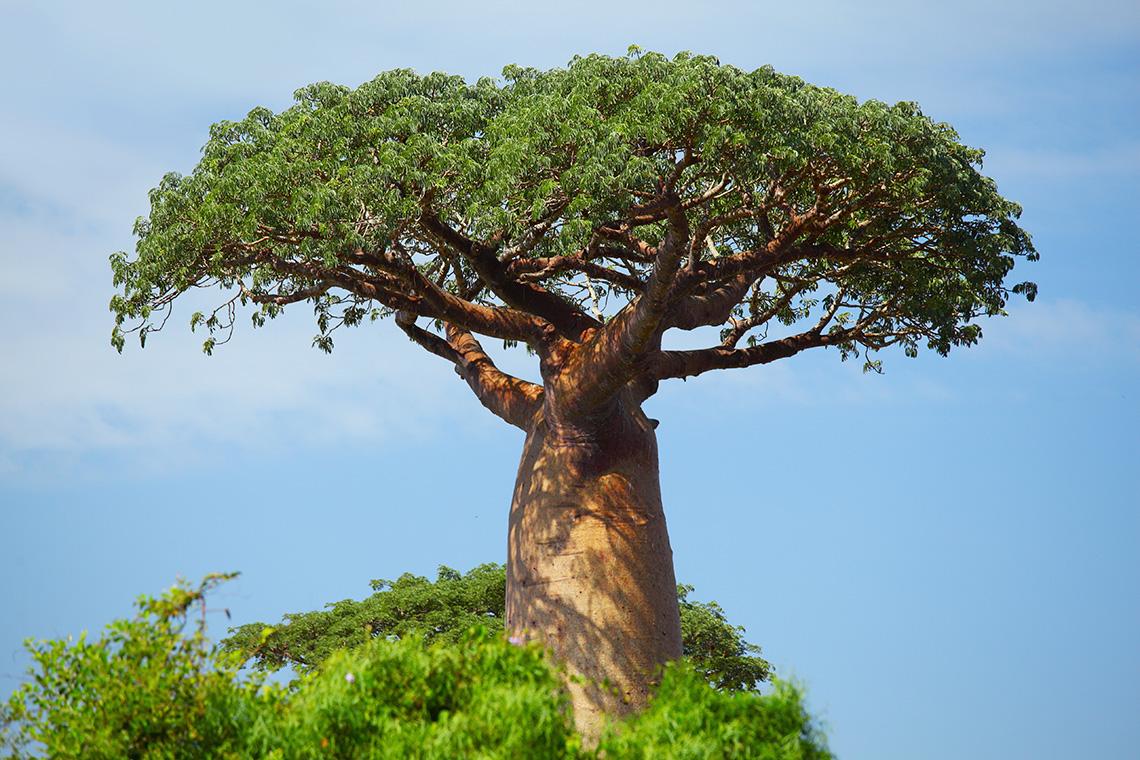 картинки все деревья они