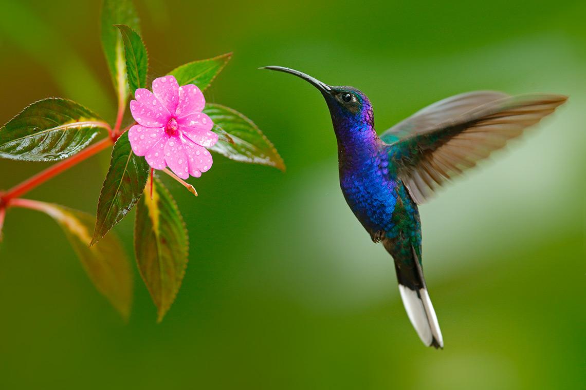 изображение картинки с птичками колибри куры сооружают своеобразный